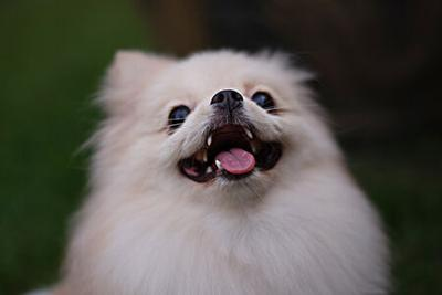 The Natural Dental Products That Aim to Keep Pets' Oral Health in Check