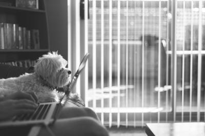 What Pet Owners Fear About Returning to Work and How to Ease That Anxiety