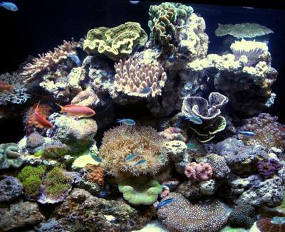 International Waters: Marine News Roundup