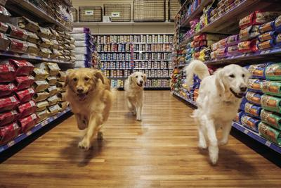 This Canadian Pet Store Chain Has Embraced Being an Omnichannel Organization