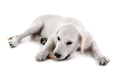 Sizzling Stock: Dog Chews