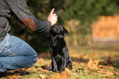 Create an Ideal Assortment of Dog Training Treats with These Strategies