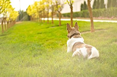 Why USA-Made Dog Foods Continue to Thrive