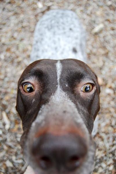 Pixabay, close up of dog