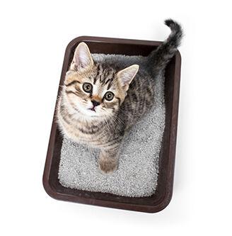 Sizzling Stock: Cat Litter