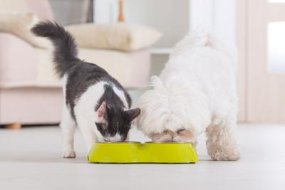 5 Pet Food Trends to Watch in 2018