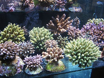 International Waters: New Players in Coral Ban