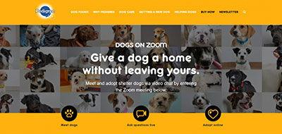 """Dogs on Zoom"" Makes Pet Adoption Accessible Virtually"