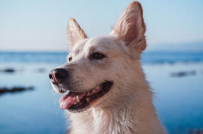 The Biggest Concerns Pet Owners Have When It Comes to Natural Dental Products