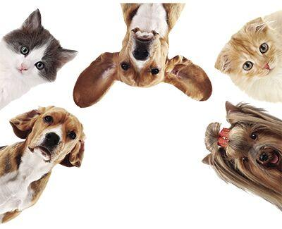 Pet Projects: The Pet Industry 'Paws It Forward'