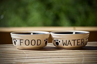 Pixabay, pet bowls