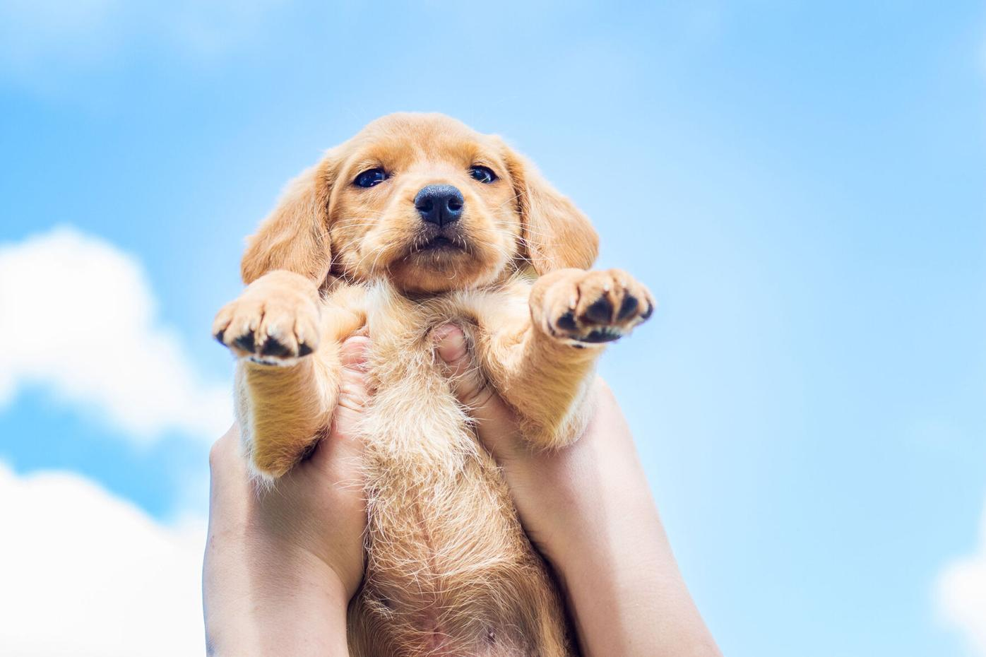 Need More Proof of the Pet Industry's Recession Resilience?