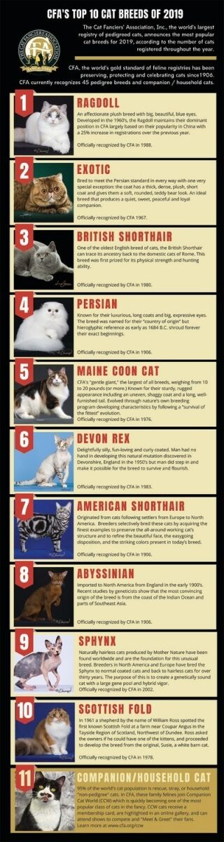These Are the Most Popular Cat Breeds of 2019