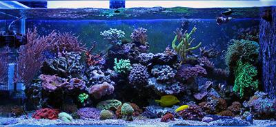 How Retailers Can Support Hobbyists With Aquarium Maintenance Products