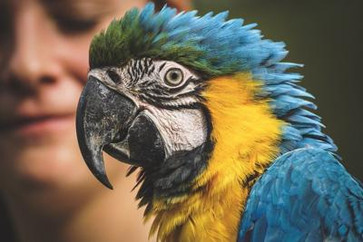 Pixabay, parrot