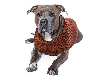 ZooDogSweater