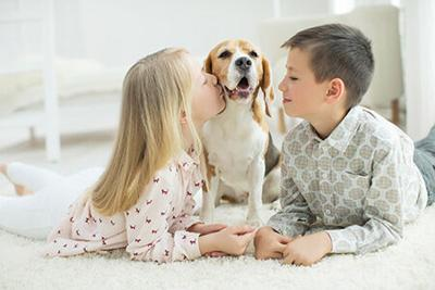 Dental Care Pet Products Vary in Format