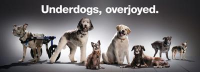 Subaru of America, underdogs campaign