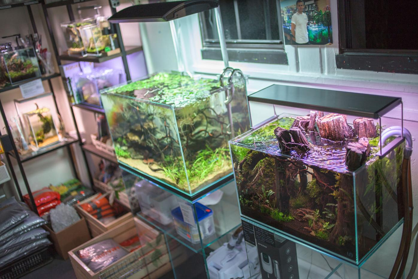 How Pet Zone Tropical Fish Expanded the Aquascaping Hobby ...