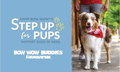 step up for pups