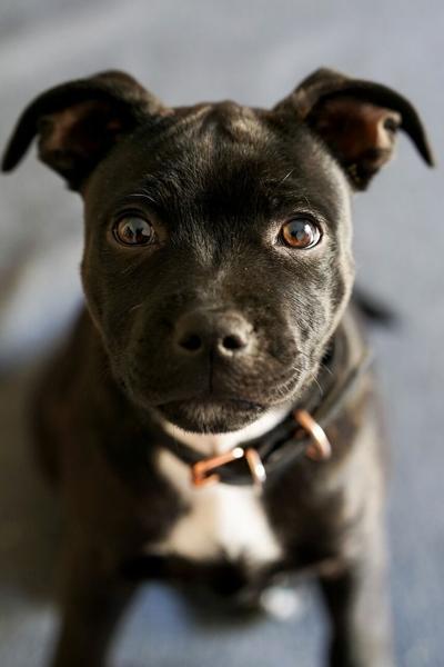 Pixabay, puppy Image by klaravohlidkova