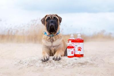 Brilliant Salmon Oil with dog