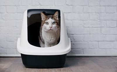 Cat Owners Look for Stress-Free Litter Solutions