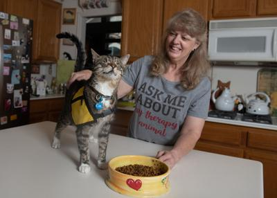 Purina Cat Chow and Pet Partners