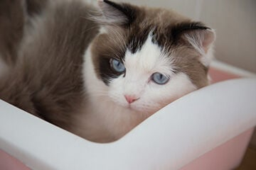 Why Natural Cat Litters Are Gaining Market Share