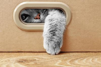 Value and Variety Are Key for Cat Toy Sales