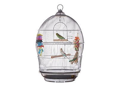 Sonata Bird Home