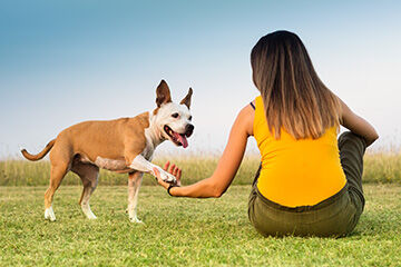 Addressing Anxiety Among Top Trends in Dog Training and Behavior Aids