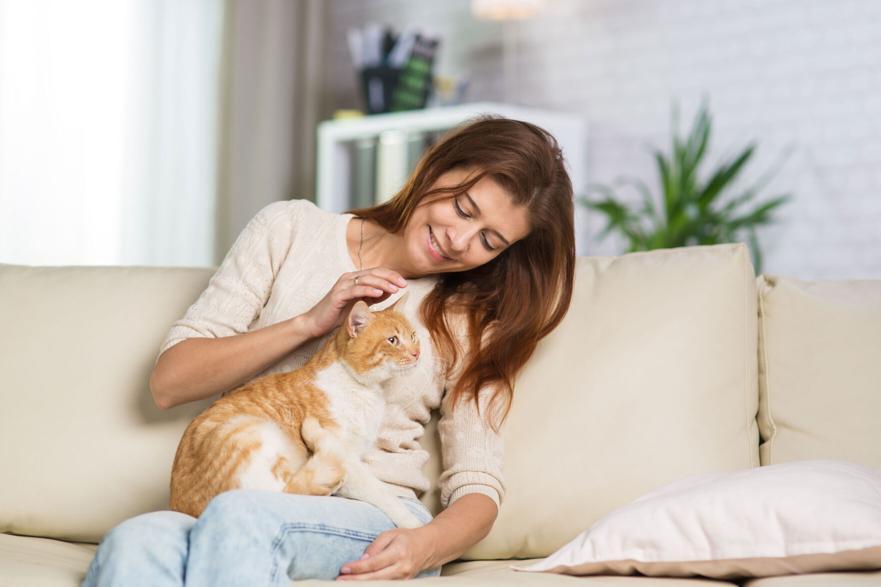 Wet Cat Food Growing in Popularity