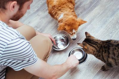 How to Position Yourself As the Pet Nutrition Expert in Your Community