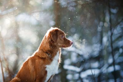 How Retailers Can End the Year Strong with Pet Apparel and Holiday Gifts