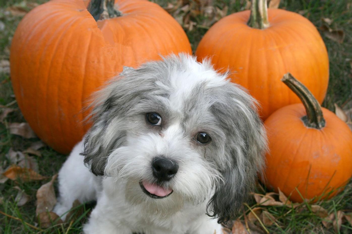 puppy-pumpkin.jpg