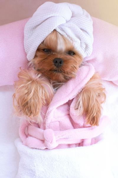 Pampering Pooches