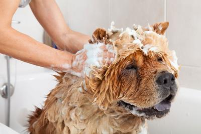 Rise in At-Home Bathing Drives Dog Spa Product Sales