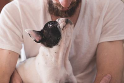 How Stay-at-Home Orders Have Affected Pets and Their Owners