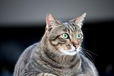 Pixabay, obese cat