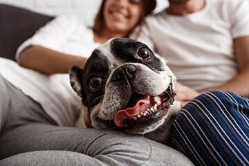 Gear Up for National Pet Dental Health Month with These Dog Products