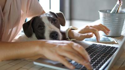 Female,Hands,Working,On,Laptop,With,Cute,Dog
