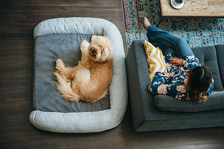 How to Make the Most of Dog Beds on Store Shelves