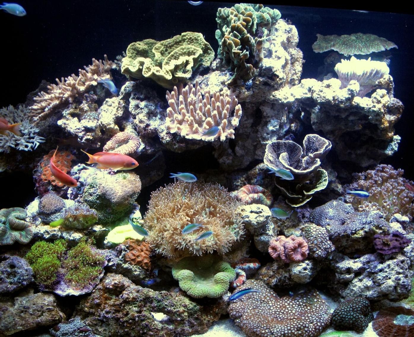 Technological Advances in Aquatics Boost Consumer Interest in Hobby