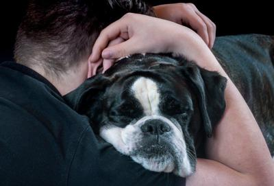 Survey: Pets Are A Source of Comfort During COVID-19