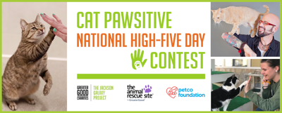 Cat Pawsitive High-Five Day Contest with images