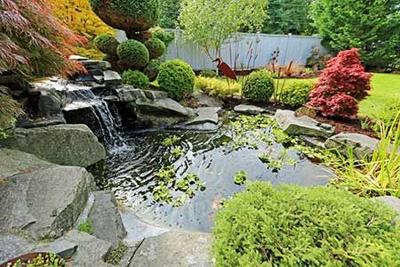 Koi Food, Services Among Top Sales Drivers for Pond Retail Sales