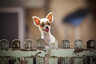 CBD Pet Product Sales Continue to Climb