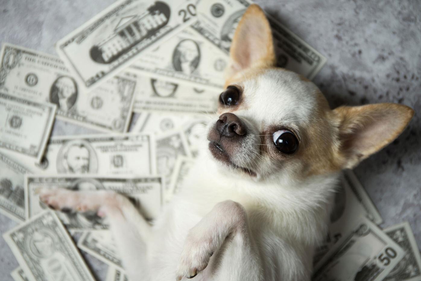 pet care trust funds