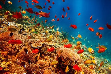 Reef Exports Hit Hard By Ongoing Regulatory Issues